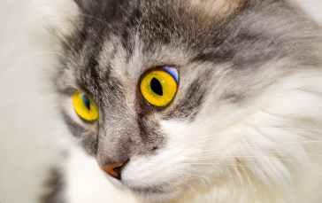 cat-eyes-face-cat-face-40994.jpeg