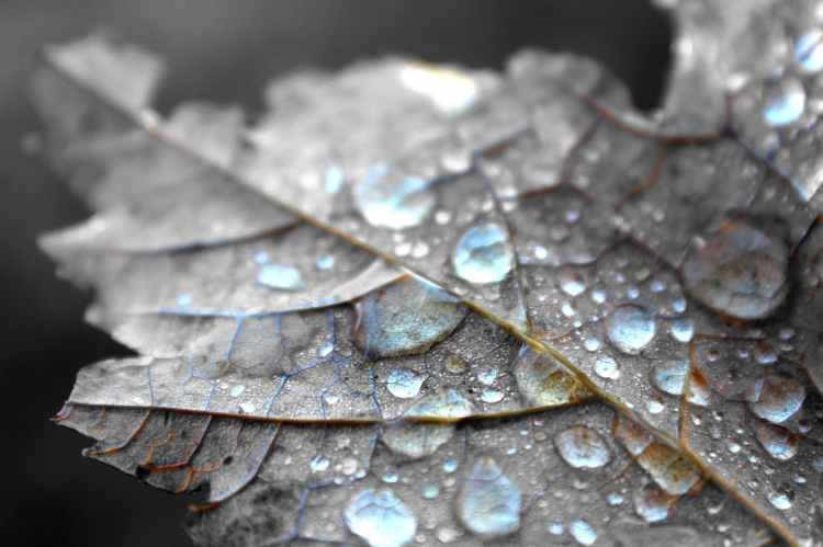 close up photography of water dew on brown maple leaf