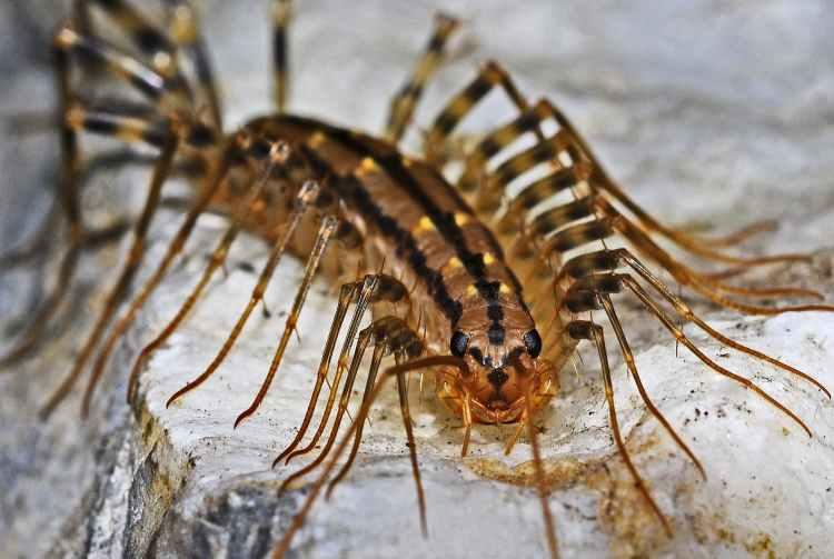 insect macro predator creepy