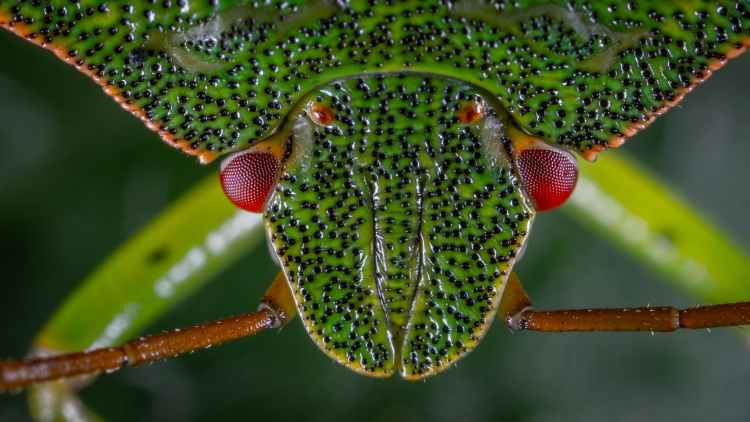 close up photo of green stink bug